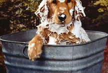 Golden love / Grew up with a half lab- half retriever named Taffy.  She was the best!!  I can not have a dog where I live right now, so pinning pictures of my favorite dog will have to do.  (For now)  / by Sharalee Walton