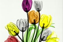 X ray flowers