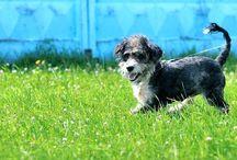 """Бездомные животные: собаки / Бездомные и найденные собаки, находящиеся на попечении Благотворительного Фонда """"Сохрани Жизнь"""". Помогите им найти Дом!"""