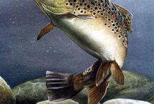 pescuit pastrav