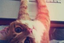 Cats!!!