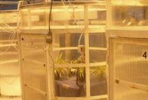 plants - studies