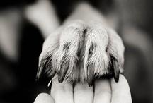 Mãos e Patas