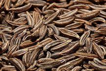 Aromatische Parfüms / Düfte die nach Rosmarin, Salbei, oder Kümmel riechen...