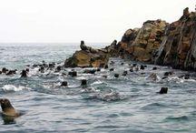 Lo mejor de las Islas Ballestas / Las Islas Ballestas en Paracas, Ica, representan un destino visitado por miles de turistas nacionales y extranjeros, ideal para la observación de fauna. #Viajes #Travel