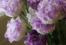 La delicadeza de las flores
