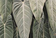 Nature : Végétation