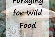 Forage & Wild Harvest / by A Life In The Wild