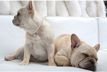 Precious Pets / We love our furry friends!  / by HSN