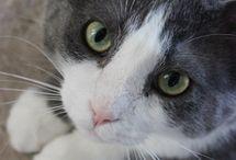 cats:):):)