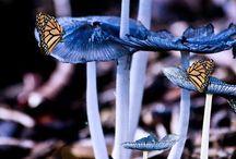 promenade dans les bois / découverte des champignons
