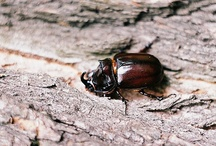 Beetles1 / by Carolyn CS