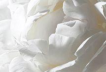 blanc / by Joel Ng