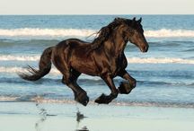 Horses / Brave, beautiful and spirited creatures.