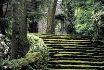 zieleń, ogród