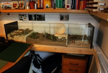 hamster cages and accesories