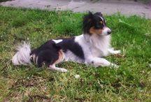 Life with a dog ♥ / Psy małe i duże, zabawne i ciekawe zdjęcia