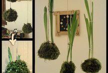 Le KOKEDAMA di dettoChiaramente.it/verde / Bacheca relativa alle foto delle Kokedama da me realizzate.  Le potete trovare anche raccolte in questo articolo:  http://www.dettochiaramente.it/verde/piante/44-piante/kokedama/61-le-mie-kokedama