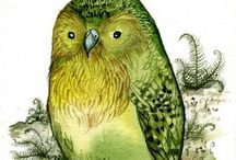 Kakapo Art / Drawings, paintings, etc...