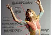 筋肉の構造資料