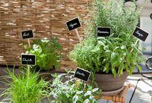 Maison déco plantes