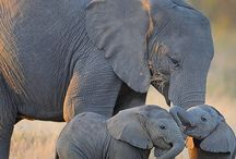 Elephants & Animals