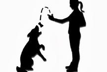 Dogs, Dogs Training, Hunde, Hundetraining, Dogtrainer, Hundetrainerin, SitStayNom / Dogs, Dogs Training, Hunde, Hundetraining, Dogtrainer, Hundetrainerin, SitStayNom