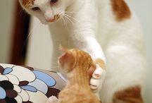 Animals ><