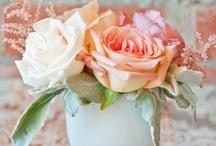 Wedding / by Kelly Courtney