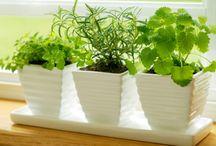 [ aromatic herbs ]