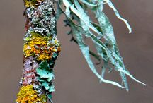 Lichen Love Art & Craft / My current body of work (paintings and glazed pottery) is inspired by the textures, colors and resilience of lichen -- a pioneer species that thrives everywhere from forests to rock landscapes.