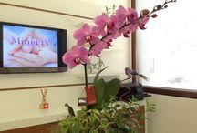 Flores e Fertilidade