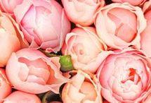 Flower / Beautiful flowers & floral arrangements.