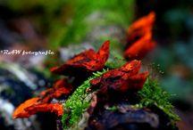 RAWfotografie - nature / Natuut nature fotografie