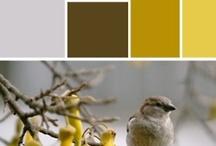 Yellow / Kolory żółte