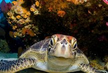 animais do mar