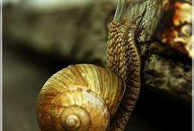 The 'naked' Snail