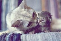 So Cute.... / by Fiona Lee