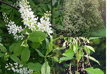 smalls trees/shrub