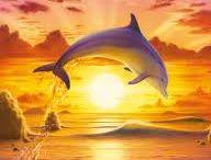 dolphines