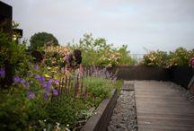 Garden design : rooftop