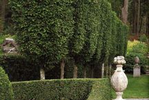 AH loves creating formal hedges