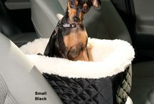 World Traveler / Tools, tips & resources to make travel with your pet easy and stress-free!  / by Drs. Foster and Smith
