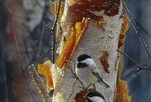 Fugler til aquarel