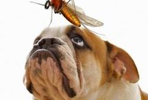 Pet Health & Safety / by All God's Creatures Pet Services