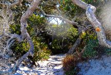 Travel: Grayton Beach