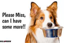 Dog-Lovers Treats and Toys / Dog treats and toys to keep your dog happy.
