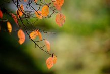 Podziim ☂ / Barevné listí, vyřezávání dýní, sbírání kaštanů, babí léto, pouštění draka, teplé oblečení, čajík, přeháňky, sklizení ovoce a zeleniny, kouření z komínů, raní mrazíky, krmení ptáčků,