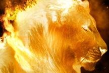 Leão da UFF
