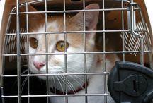Feline Behavior/Training